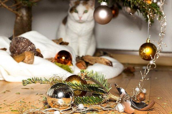 Vianočné pohromy: Môžu sa stať aj u vás!